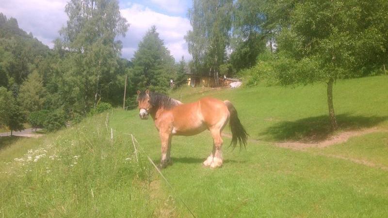 Herrlich kräftige Pferde einer regionalen Forstwirtschaft pflegen kostenfrei Ihre Wiese