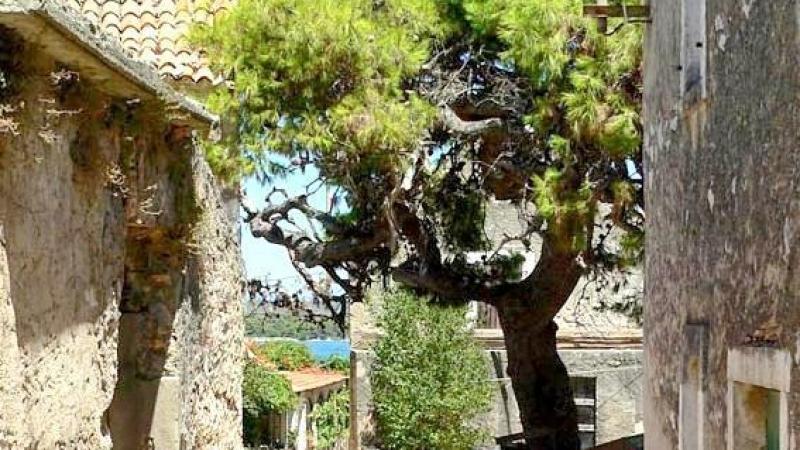 04_nachhause-immobilien_85ae91abf5ba0e2d8e034c7cc3d6044a99c2dcc7 Mit traumhaftem Meerblick ... Sanierungsbedürftiges Natursteinhaus auf der Insel Pasman