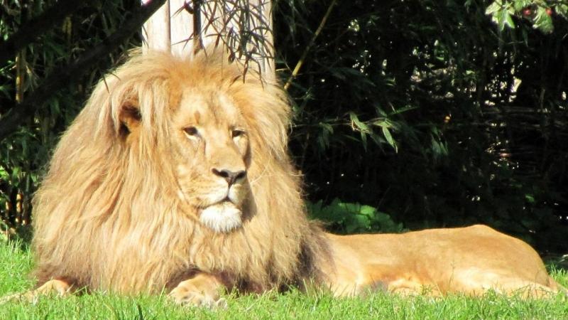 Und Leipzig ist durch seinen artenreichen Zoo weltweit bekannt.